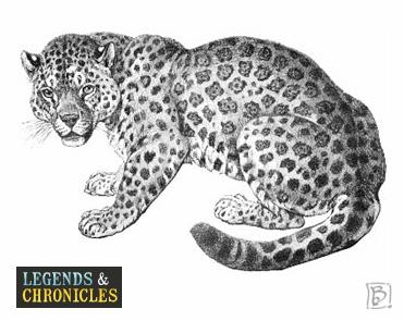 The Leopard Big Cat
