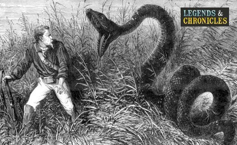 Giant Anaconda 1