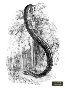 Giant Anaconda 2