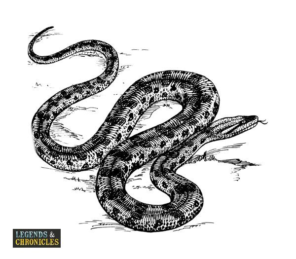 Giant Anaconda 3