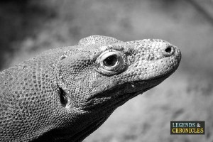 Komodo Dragon 1