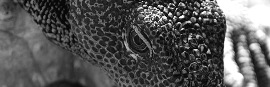 Monitor Lizard Thumbnail